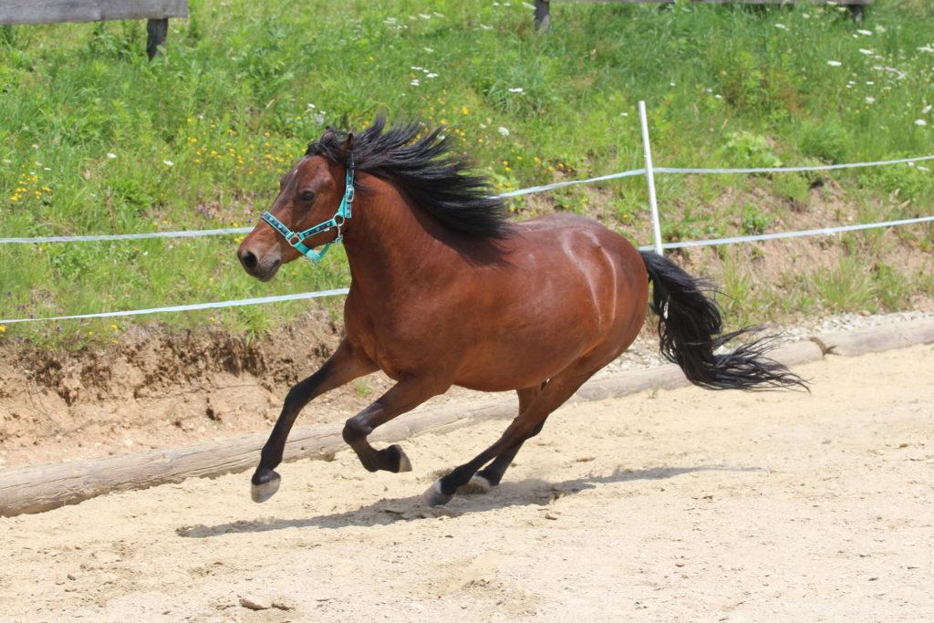 Horsemanship_ equiprana Pferdetraining