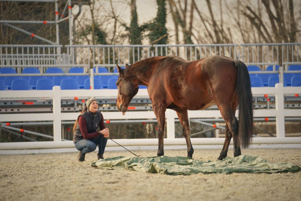 Equiprana Pferdetraining_ horsemanship