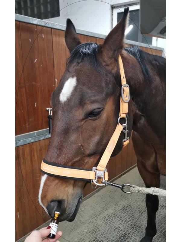 aromaöle_equiprana pferdetraining