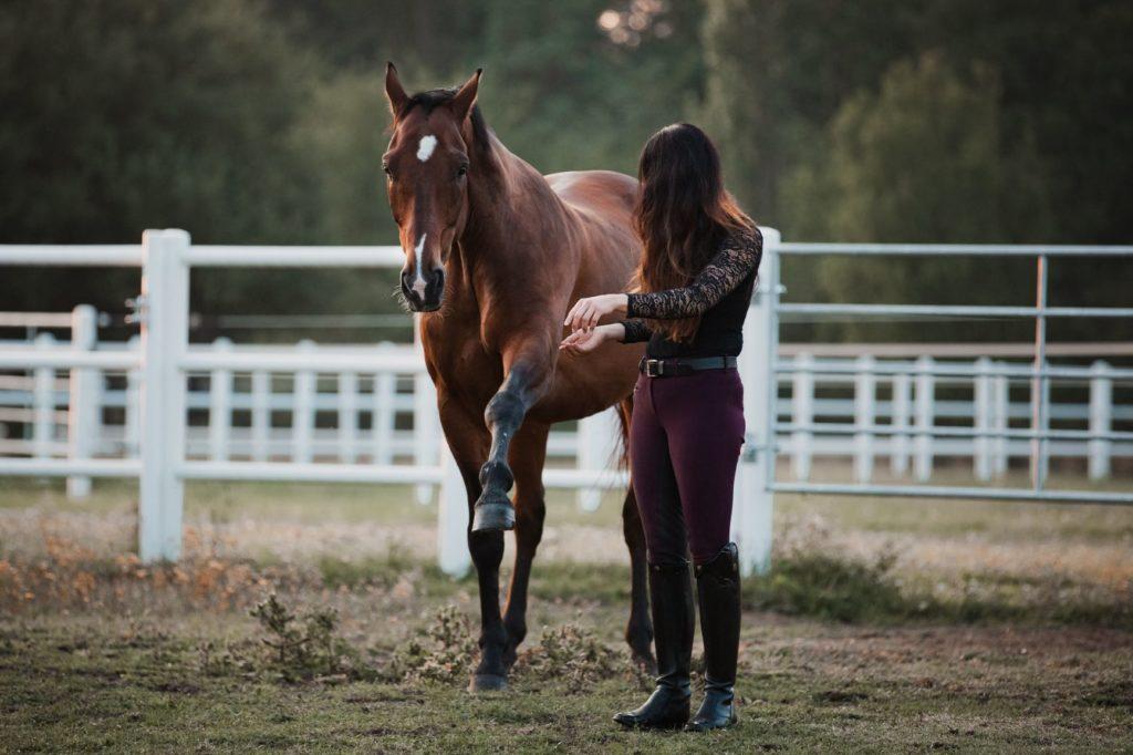 Bodenarbeit_equiprana Pferdetraining